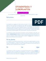 Fotosintesis y Cloroplastos