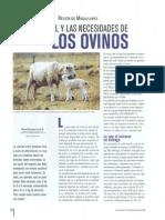 Especial Ovinos Y Caprinos - El Coroinal Y Las Necesidades de Los Ovinos