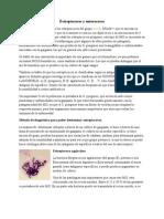 08 Streptococos, Enterococos y Neisserias (21!04!10)
