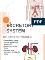 The Excretory System.ppt