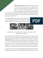 Keanekaragaman Hayati Tingkat Jenis Di Indonesia