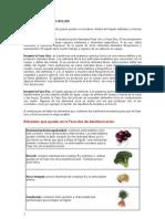 Alimentos Para Reforzar Sistemas