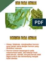 Hormon 3