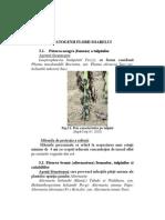 bolile produselor vegetale depozitate
