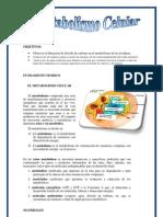 EL METABOLISMO CELULAR.docx