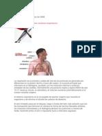 Importancia de Los Pulmones