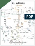 Ruta Metabolica Bioquimica(3)