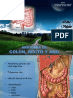 anatomacolonanoyrecto-120329133913-phpapp01