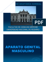 3 Genital Masculino