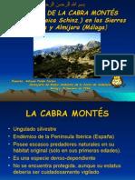 GESTIÓN DE LA CABRA MONTÉS