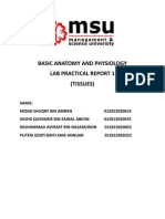 Basic Anatomy and Physiology 2