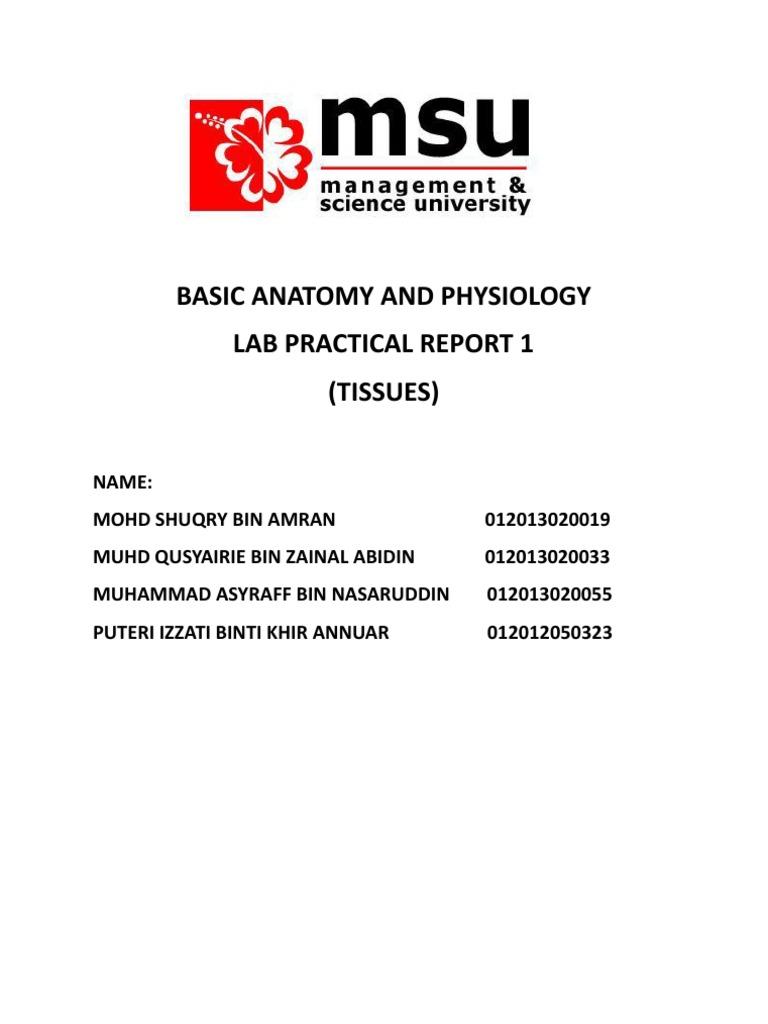 Basic Anatomy and Physiology 2   Tissue (Biology)   Epithelium