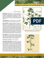 Fenogreco PDF