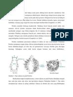 Porifera dan pembagian kelas-kelasnya
