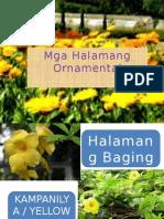 Halamang Ornamental.pptx