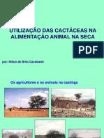 palestracactceas-100624193102-phpapp01
