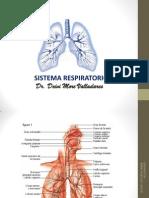 Diapositiva de Sistema Respiratorio. Dm