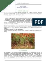 Monarda.pdf