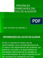 Enfermedades Del Algodon