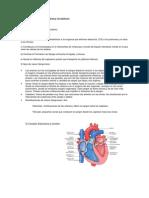 Guía de Estudio Biología Sistema Circulatorio