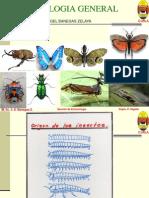 Entomolo Gia 1