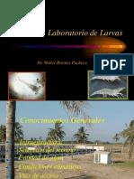 Laboratorio de Larvas1, Maylarvaso 31-2013