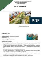 Clas. 9_Cultivo Esparrago