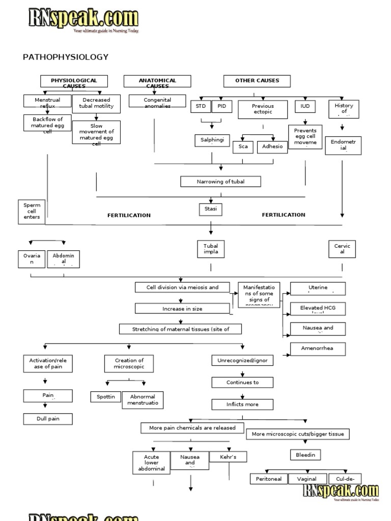 Bonito Anatomy And Physiology Of Ectopic Pregnancy Festooning ...