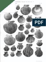 Fauna Malacologica Mariana, Cerulli-Irelli; BIVALVIA - Paleontologia Malacologia - Conchiglie Fossili del Pliocene e Pleistocene