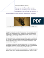 La base de datos de insectos que esclarecen crímenes