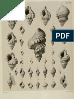 I molluschi dei terreni terziari del Piemonte e della Liguria; L. Bellardi, 1872 - PARTE 1 - Paleontologia Malacologia - Conchiglie Fossili del Pliocene e Pleistocene