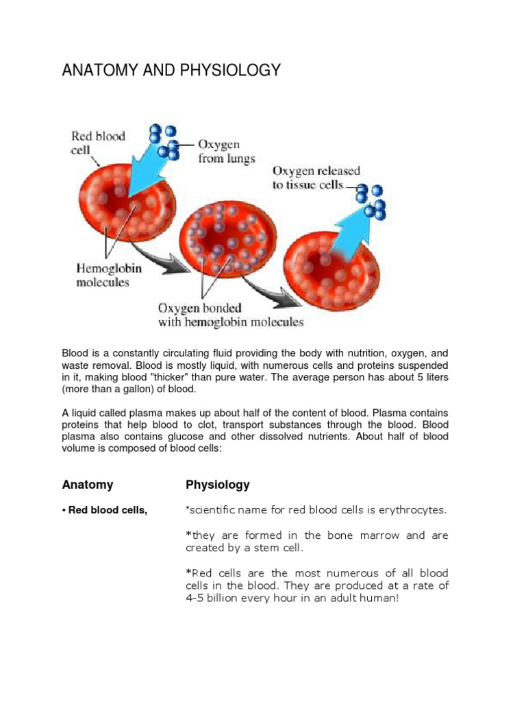 Anatomy and Pathophysiology of Anemia | Granulocyte | White Blood Cell