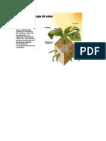 Fotosíntesis - capa de ozono