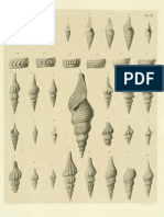 I molluschi dei terreni terziari del Piemonte e della Liguria; L. Bellardi, 1877 - PARTE 2 - Paleontologia Malacologia - Conchiglie Fossili del Pliocene e Pleistocene
