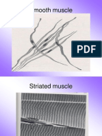 Muscle, Nerve