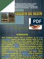 CULTIVO OLIVO