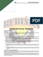 29934497 Metabolismo Celular Respiracion