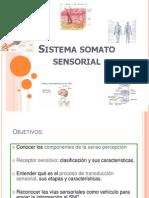 Sistema Sensorial y Motor KIne
