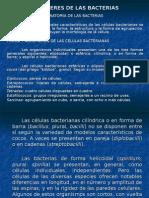 CARACTERÍSTICAS DE LAS BACTERIAS