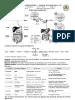 Resumo Digestão e Respiração