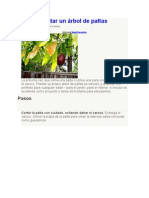 Cómo plantar un árbol de paltas