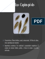 Eleusine-indica-Campim-pé-de-galinha
