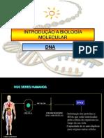estrutura e função acidos nucleicos