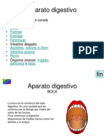 3_Aparato_dijestivo