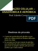 Aula 5 - Respiração celular Anaeróbica e aeróbica