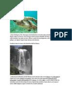 RESERVAS NATURALES DE CENTROAMERICA.docx