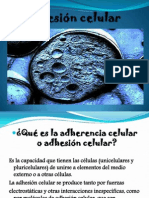 adhesioncelular ppt (2)