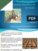 Transformación y Mejoramiento Genético en Animales