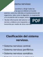 Sistema Nervioso Power