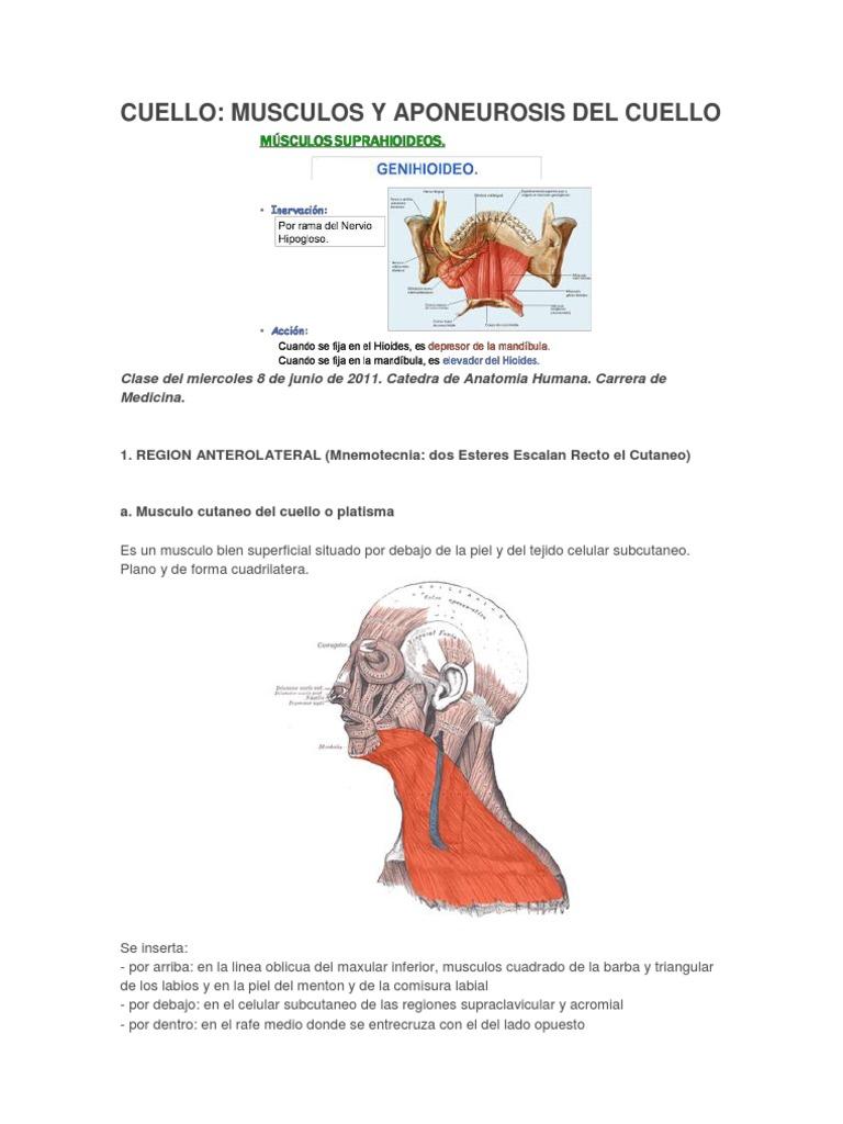 Asombroso Músculos De La Mandíbula Humanos Anatomía Colección ...